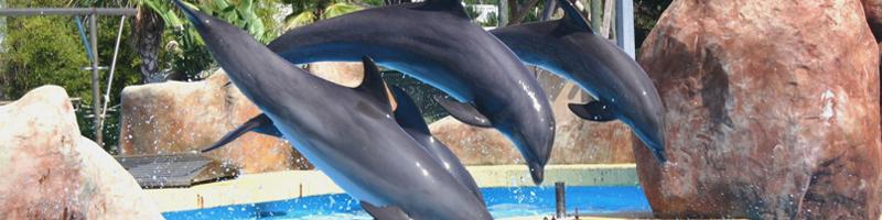 telligo mon ami dauphin