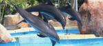dauphins-telligo