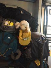 Le mouton Telligo au milieu des bagages